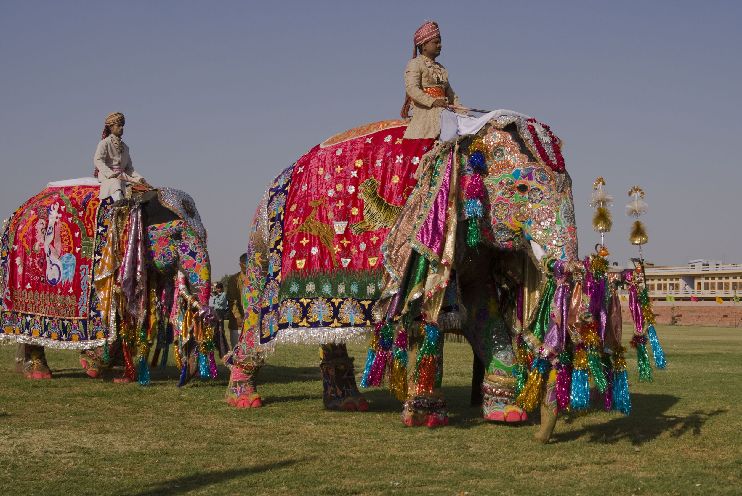 The Elephant Interview - photo#48