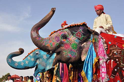 elephant-fest-2_032211094233